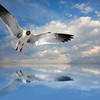 """Lone Gull""<br /> Honorable Mention - Digital Projection<br /> Terry Yarbrough"