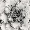 """Winter Kale""<br /> Honorable Mention - Digital Projection<br /> Tim Stacks"