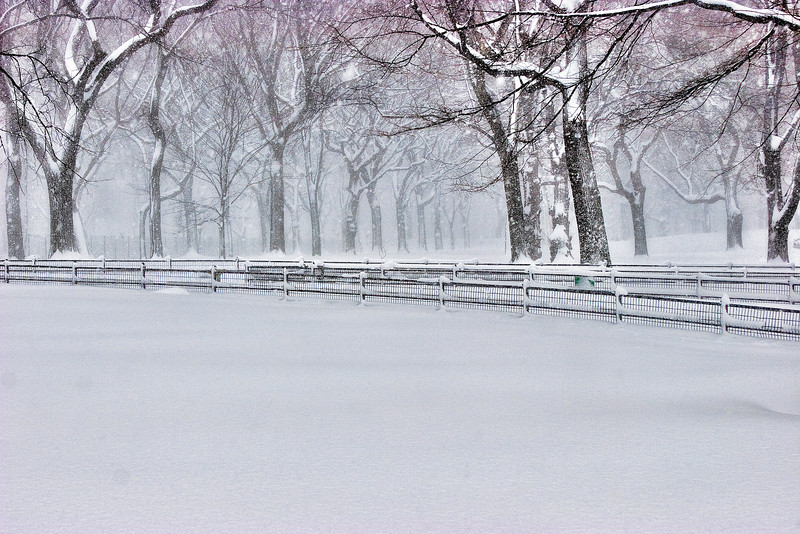 """""""Only Snow And Trees""""<br /> Honorable Mention - Digital Projection<br /> Gary Ricketts"""