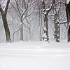 """""""Lamps And Trees In The Snow""""<br /> 3rd Place - Digital Projection<br /> Gary Ricketts"""