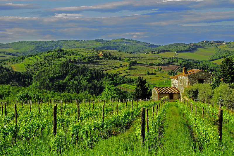 """""""Tuscany Vineyard""""<br /> Honorable Mention - Digital Projection<br /> Charlie Stewart"""