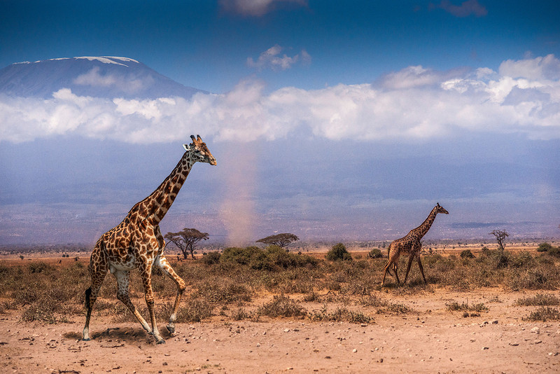 """""""Gliding Giraffes""""<br /> 2nd Place - Digital Projection<br /> George Ritchey"""