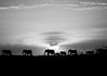 """Elephant Walk At Sunset""<br /> Honorable Mention - Digital Projection <br /> George Ritchey"