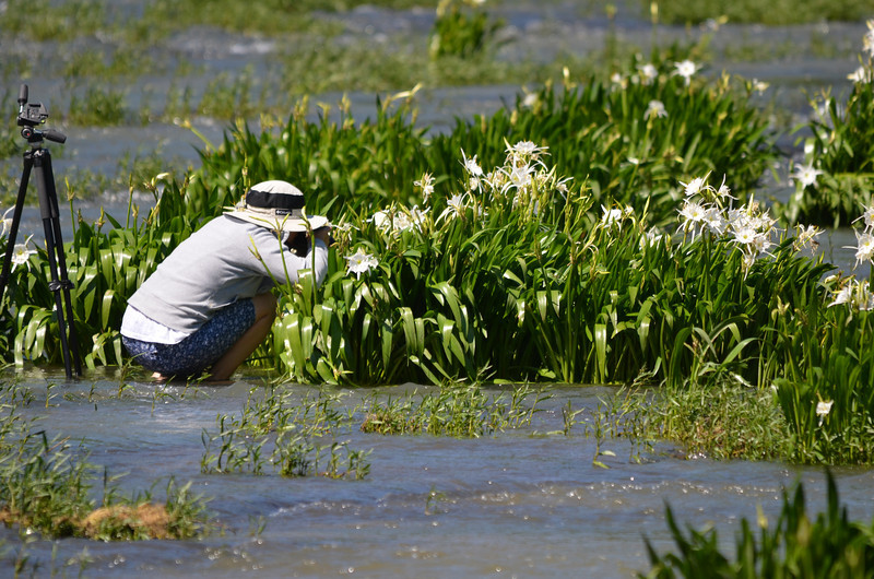"""""""Photographing The Lillies""""<br /> Honorable Mention - Color Prints<br /> Jane Tilley"""