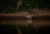"""On The Cahaba River""<br /> Honorable Mention - Digital Projection<br /> Steven Grunfeld"