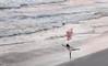 """Beach Ballerina""<br /> 3rd Place - Digital Projection<br /> Ken Boyd"