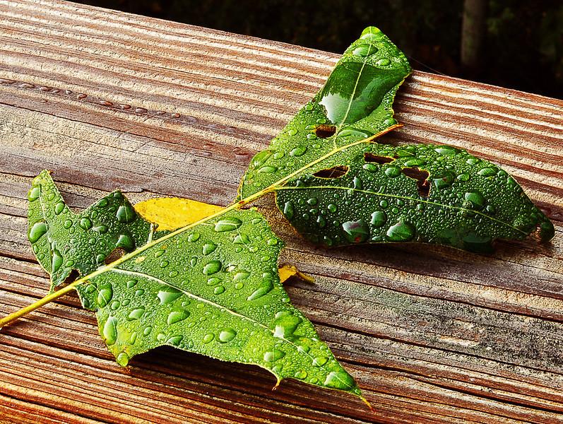 Reflective Leaf