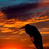 Heron at Daybreak