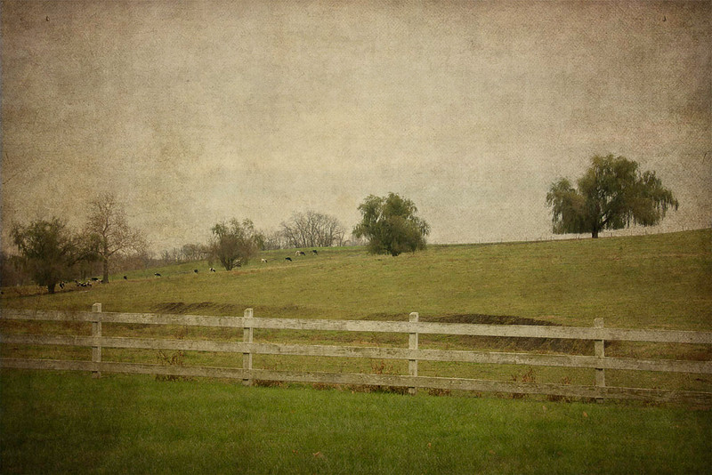 Lancaster Pasture