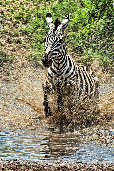 Avoiding the Crocs