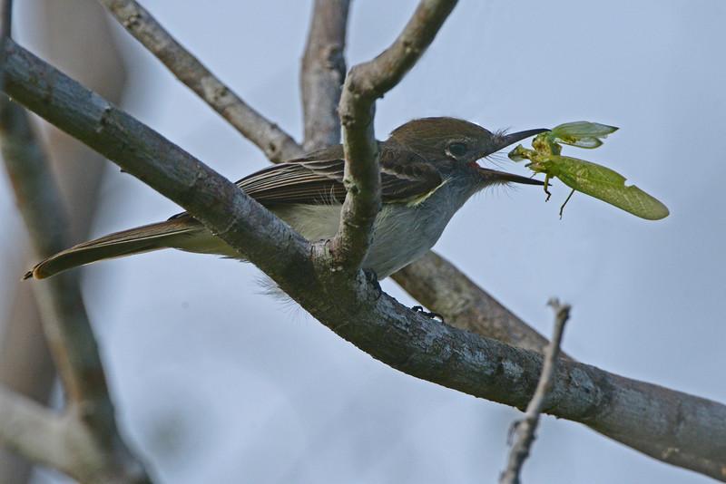 Bird and Grasshopper
