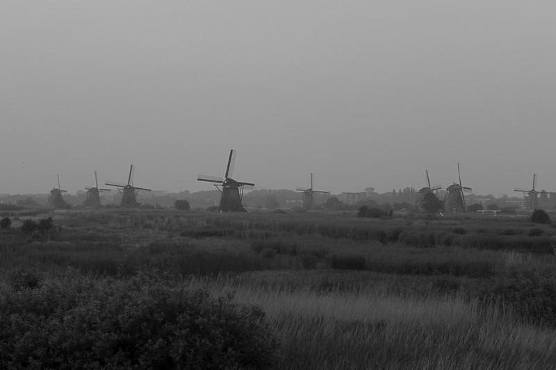 Kinderdijk Fields