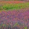 Impression of Monet