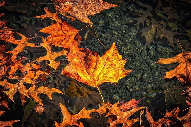Leaf Graveyard