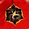 Tulip Polygon