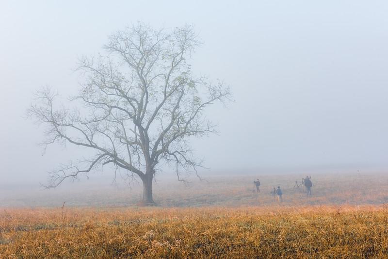 Fog in the Cove