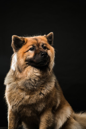 Dog Day 17th December-0022