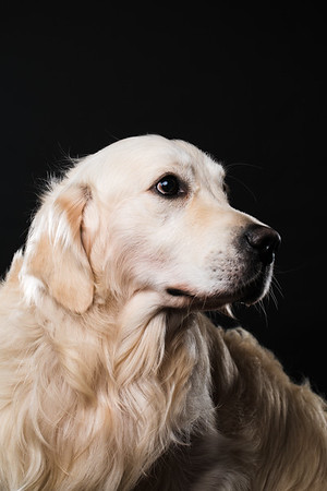 Dog Day 17th December-0026