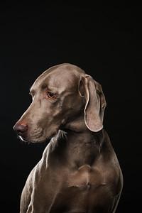 Dog Day 17th December-0008