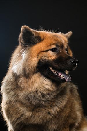 Dog Day 17th December-0024