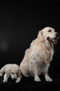 Dog Day 17th December-0041