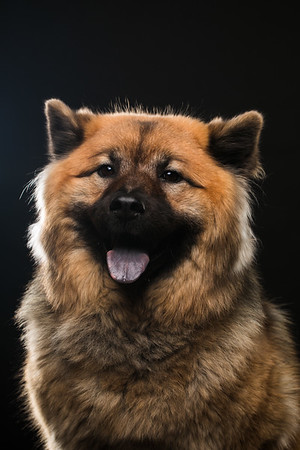 Dog Day 17th December-0025