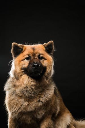 Dog Day 17th December-0021