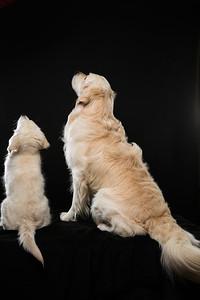 Dog Day 17th December-0042