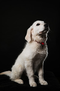 Dog Day 17th December-0033