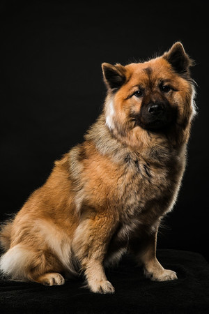 Dog Day 17th December-0017