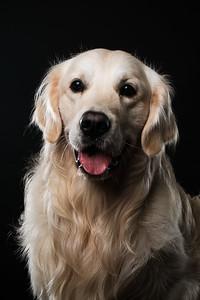 Dog Day 17th December-0030