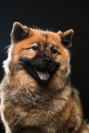 Dog Day 17th December-0023