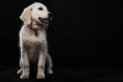 Dog Day 17th December-0038
