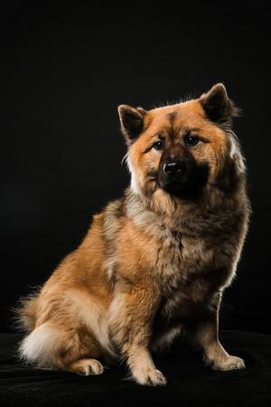 Dog Day 17th December-0018