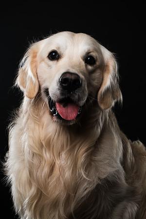 Dog Day 17th December-0028