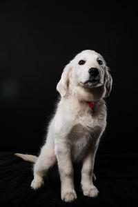 Dog Day 17th December-0037