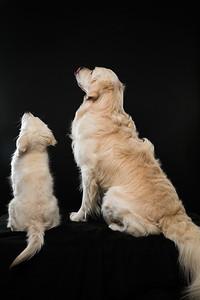 Dog Day 17th December-0043