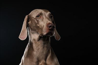 Dog Day 17th December-0011