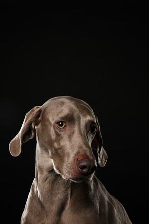 Dog Day 17th December-0004