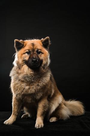Dog Day 17th December-0020
