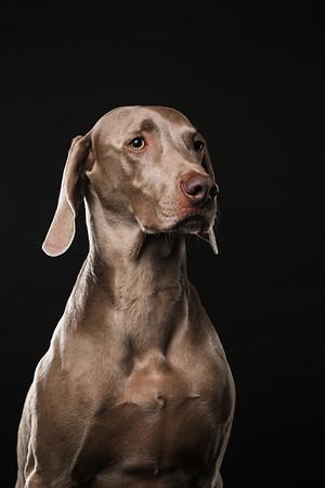 Dog Day 17th December-0006