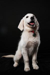 Dog Day 17th December-0036