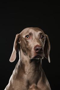 Dog Day 17th December-0007