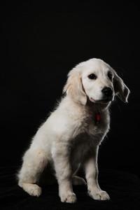 Dog Day 17th December-0032