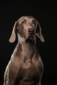 Dog Day 17th December-0009
