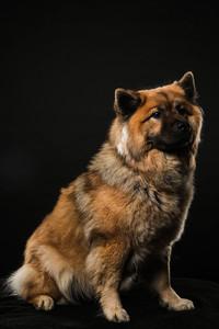 Dog Day 17th December-0016