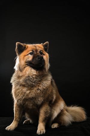 Dog Day 17th December-0019