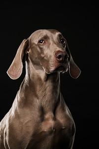 Dog Day 17th December-0015
