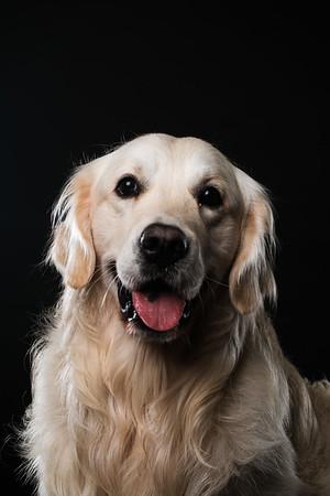 Dog Day 17th December-0027
