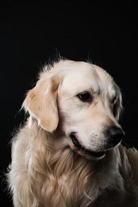 Dog Day 17th December-0031